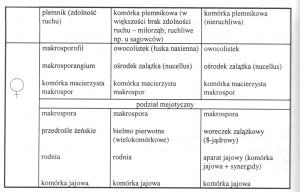 organy homologiczne żeńskie